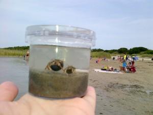 20140816 Crabs